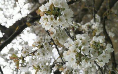 Monatsrückblick April 2021 – Wachstum im Verborgenen