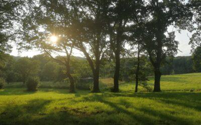 Monatsrückblick Juli 2021 – Heilung in der Natur